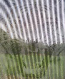 tiikeri_ikkuna